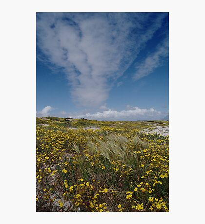 Spring is Beautiful Photographic Print