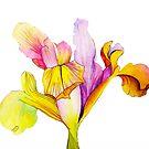 Tulip by Alice Prior