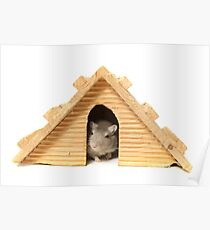 Successful mouse living in a wooden house Poster