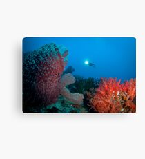 Diver surveying beautiful reef scene Canvas Print