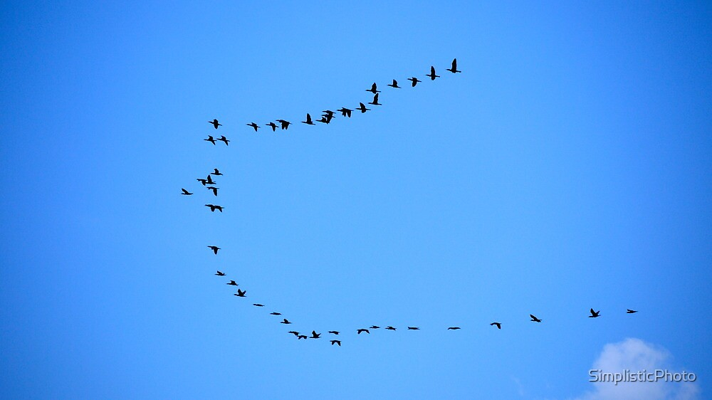 Birds Flying in Formation by SimplisticPhoto