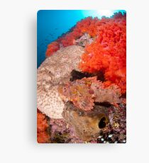 Scorpion fish on reef wall Canvas Print