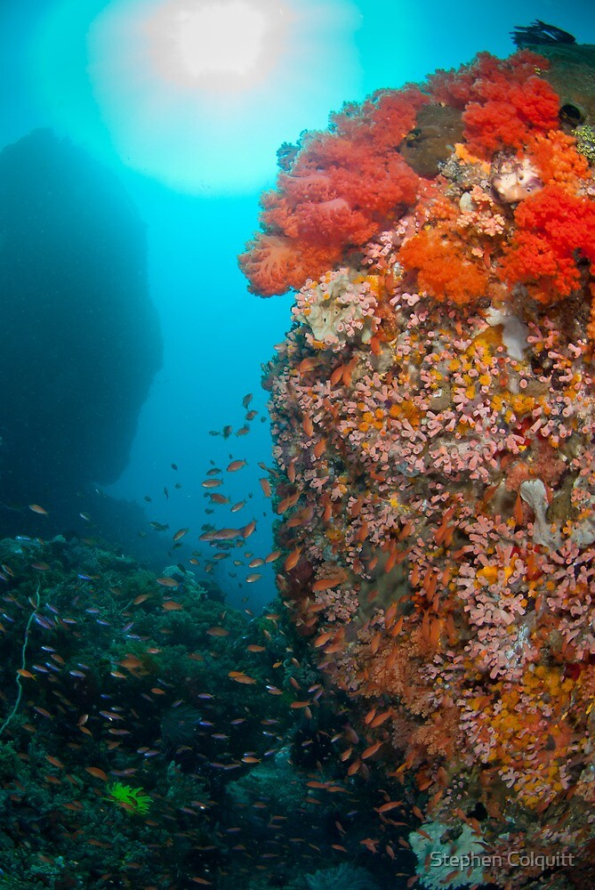 Reef scene with soft coral by Stephen Colquitt