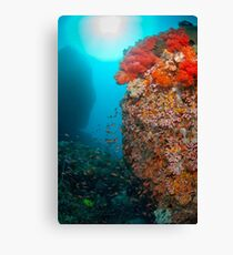 Reef scene with soft coral Canvas Print