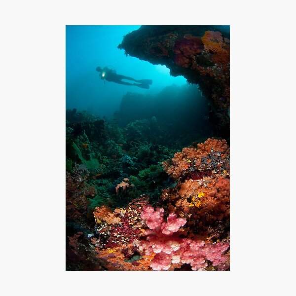 Diver in coral garden Photographic Print