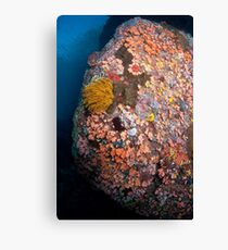 Ornate undersea boulder  Canvas Print