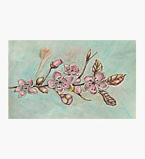 cherry blossom flowers Photographic Print