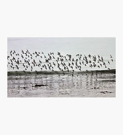 Crowded Sky Photographic Print