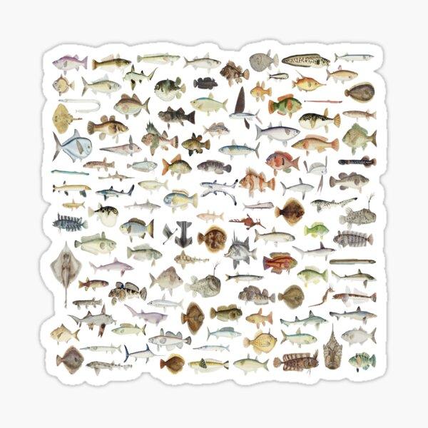 North American Freshwater Fish Sticker