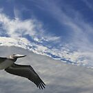 Flight by Imagery
