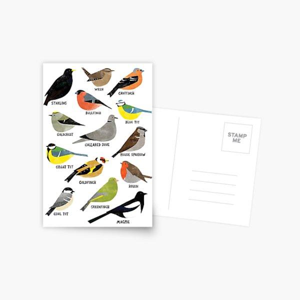 British Bird ID Chart Postcard