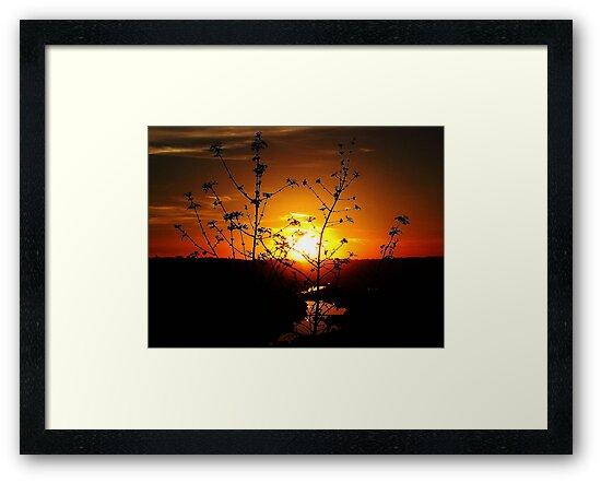 Sensational Sunset by Brenda Dahl