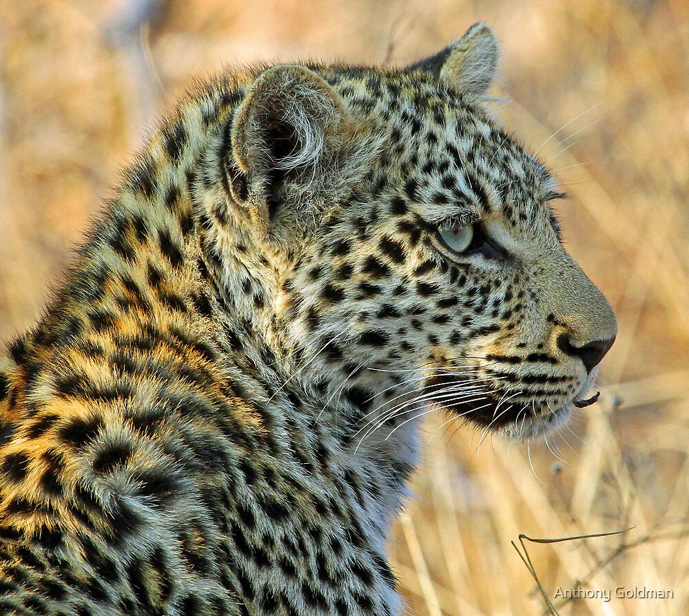If you like my profile you have to come to Africa to see my better side !! by jozi1