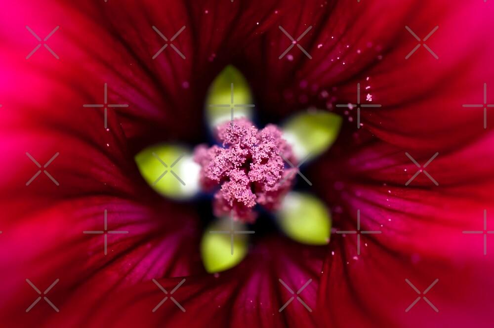 Deep into a red malva by marina63