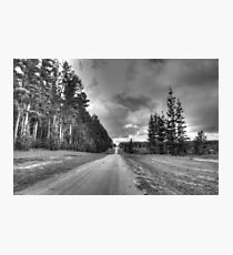 Old pines Photographic Print