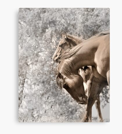 Mare and her filly Canvas Print