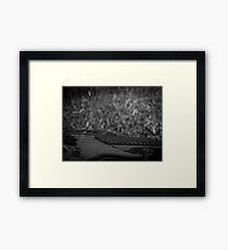 Music Nature: Bass 1 Framed Print