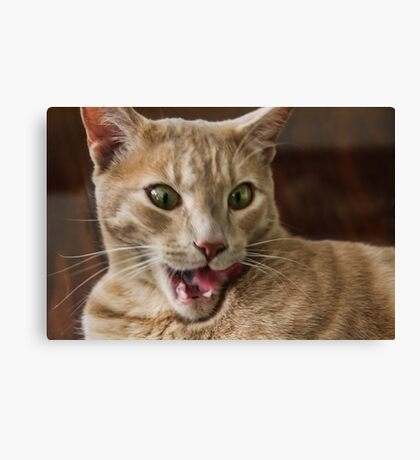 OMG! Who Let That  Dog In? Canvas Print