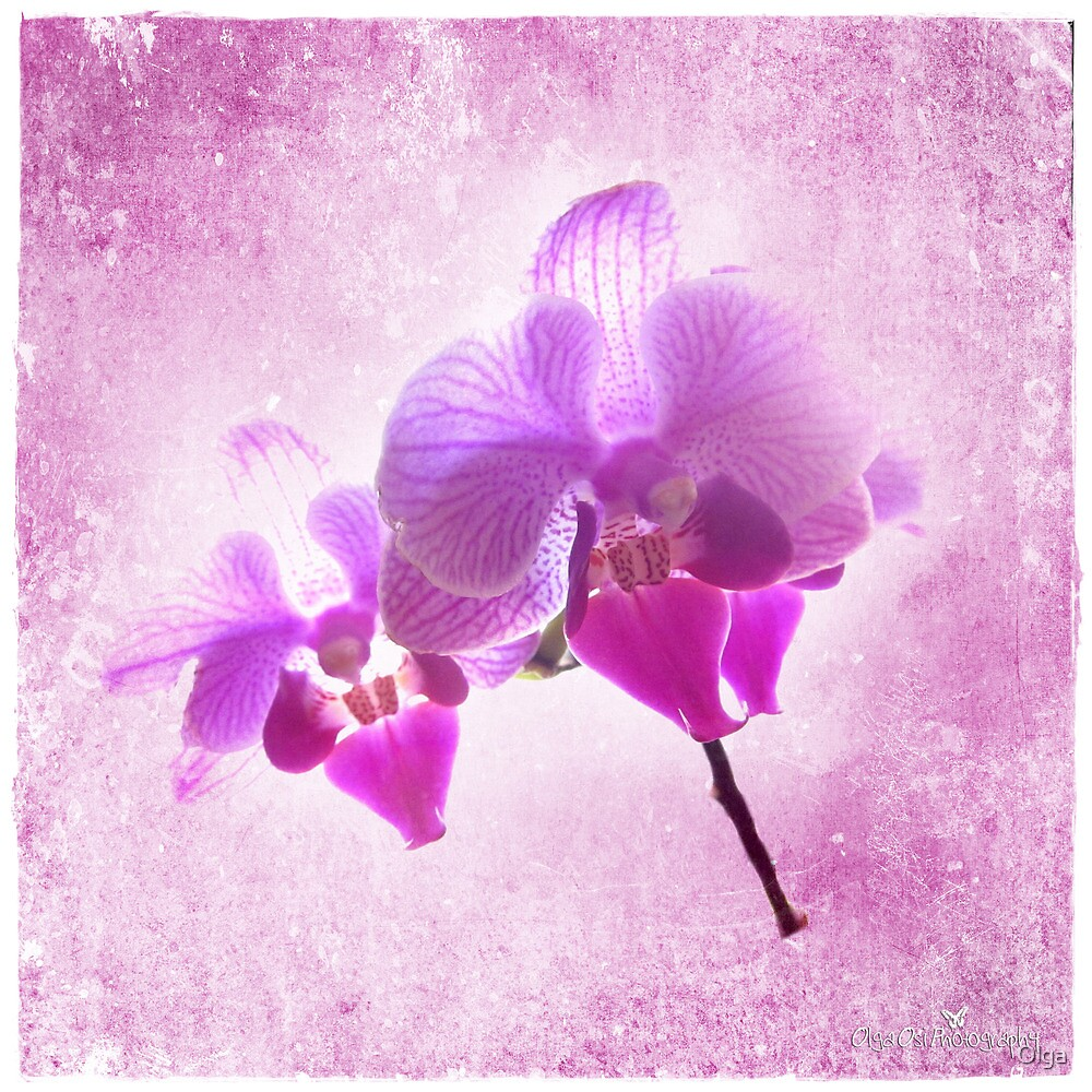 Orchid mystic by Olga