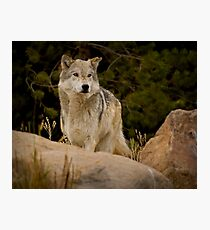 The Look Of A Hunter Photographic Print