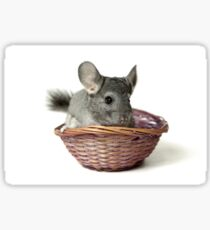 Chincilla in a straw basket  Sticker