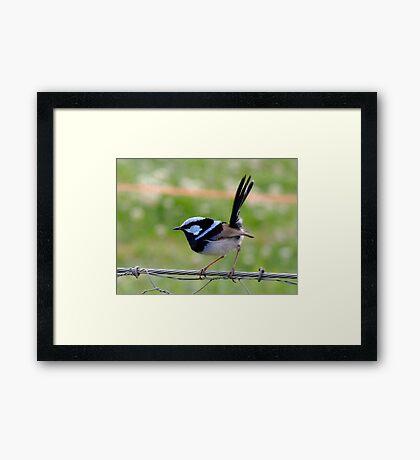 Little Blue Bird of Happiness Framed Print