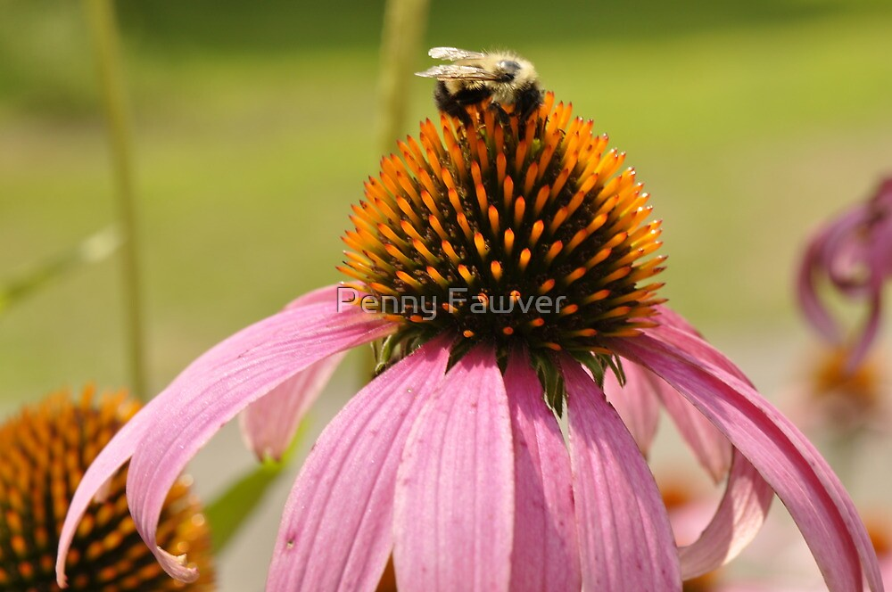 sweet nectar by Penny Fawver