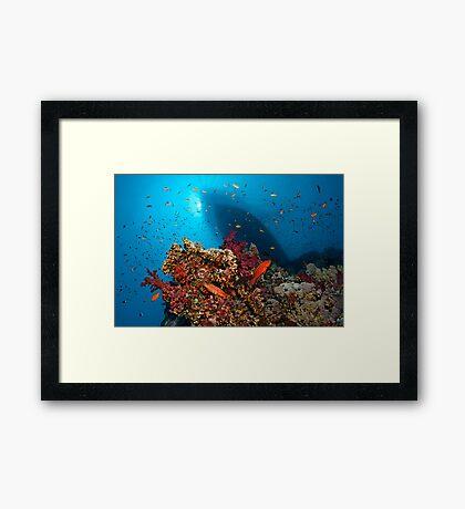 Divers Heaven Framed Print