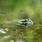 Froggy I by Laracoa