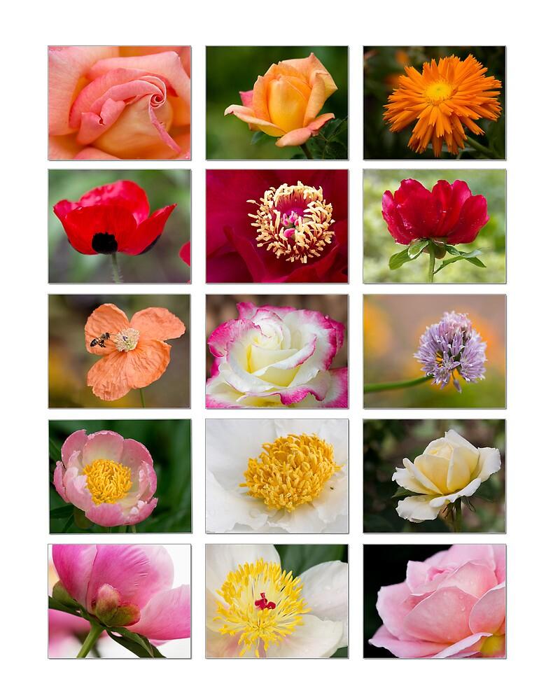 Flower Collage on White by Jerry Deutsch