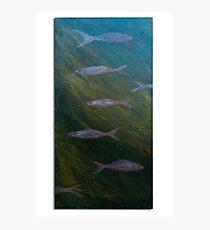 Aqua wildlife Photographic Print