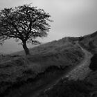 Tree, Win Hill by Andy Stafford