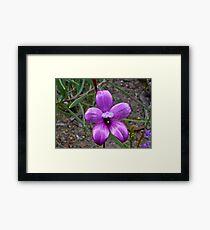 Enamel Orchid Framed Print