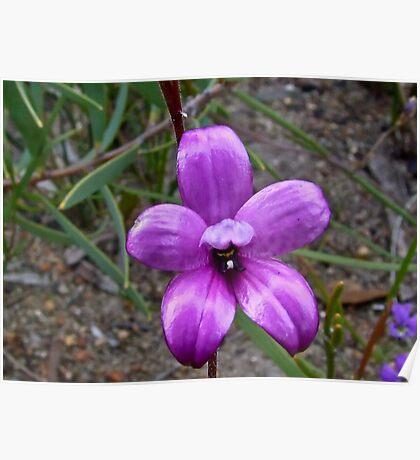 Enamel Orchid Poster