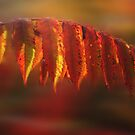 Sumac Fall by Wayne King