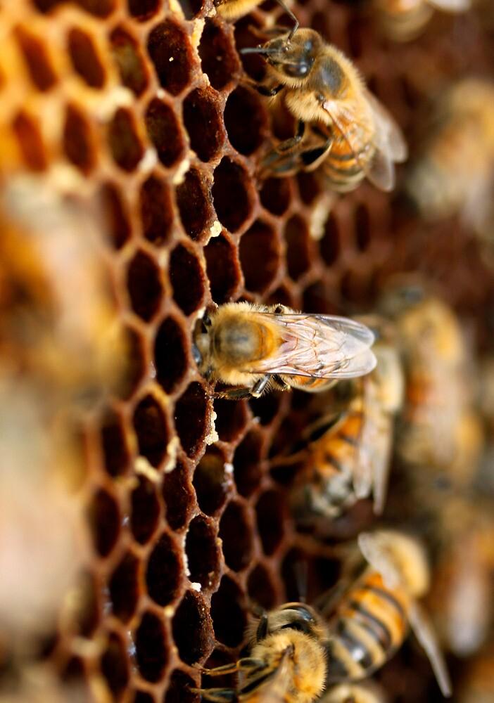 discovering honey by Cara Merino
