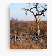 Couple of zebras Canvas Print