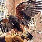 Eagle 3 by MarceloPaz