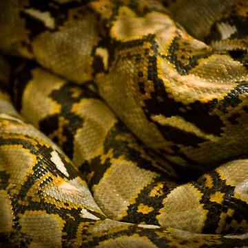 Anaconda by acedesign