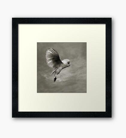 """Night Owl 2"" Framed Print"