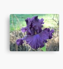 Thundermaker - Bearded Iris Canvas Print