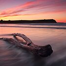 Coles Beach Log by Kyle  Rodgers