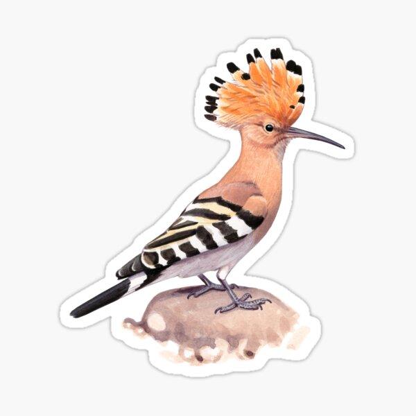 Eurasian Hoopoe Sticker