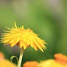 A Touch Of Yellow  by NewfieKeith