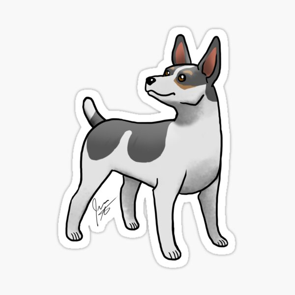 Rat Terrier - Black Tri Sticker
