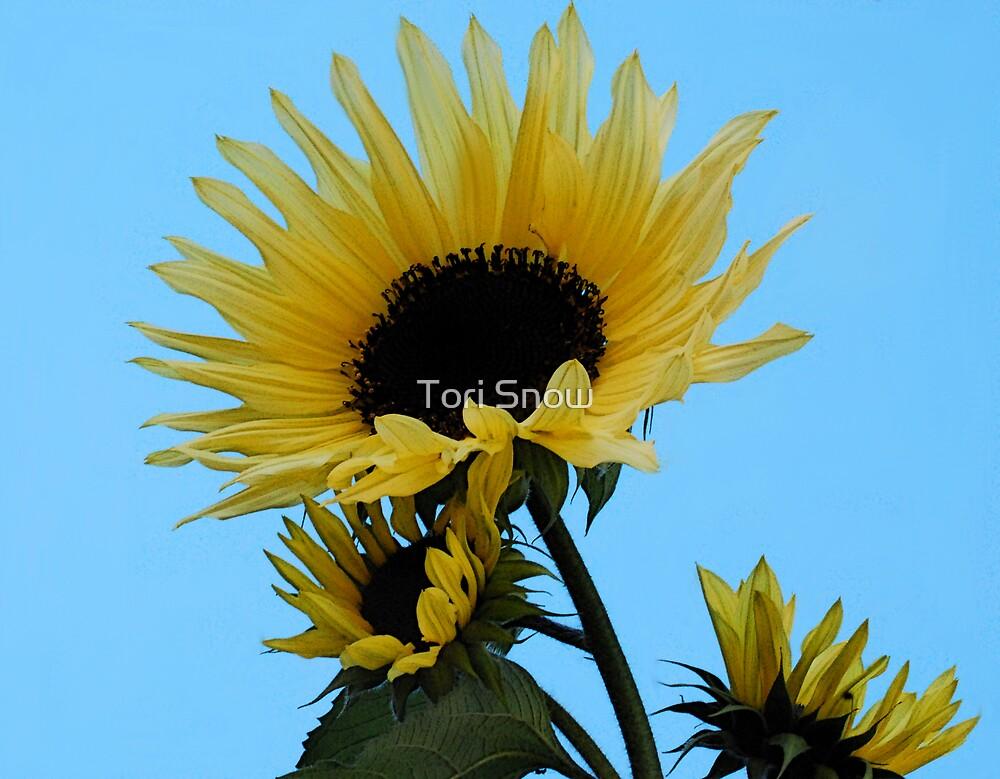 Blue Skies & Sunshine by Tori Snow