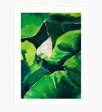 New Born Lotus Art Print