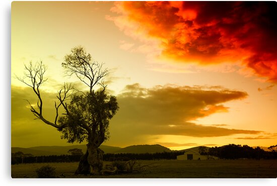 The sky, the tree and me by Maree Cardinale