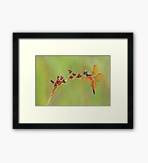 Eastern Amber Wing Dragonfly Framed Print