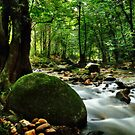 201209021009 Forest Stream by Steven  Siow